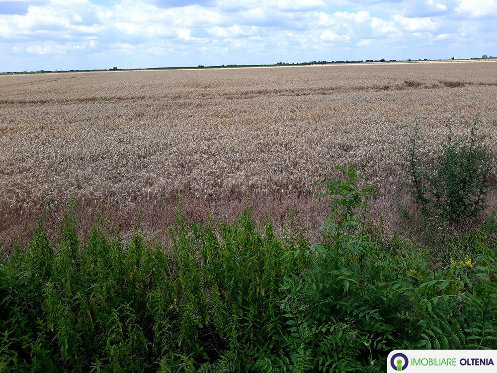 vand 15687 mp. teren agricol extravilan compact